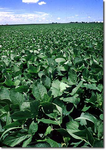 soybeans_image_hsc.jpg