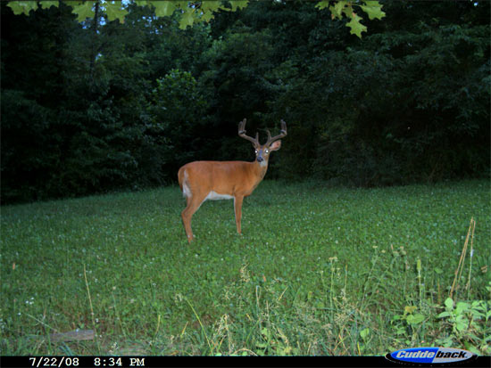 Why Plant Food Plots?