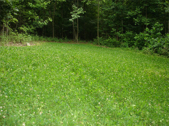 Food Plot Size Selection